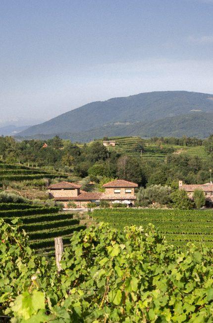 Azienda vinicola Lis Fadis
